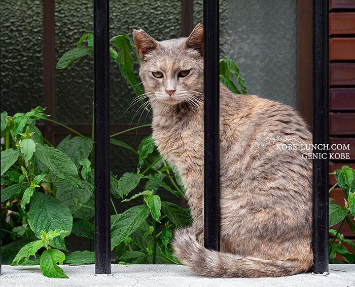 神戸三宮野良猫