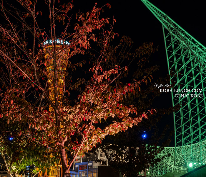 神戸ポートタワー紅葉