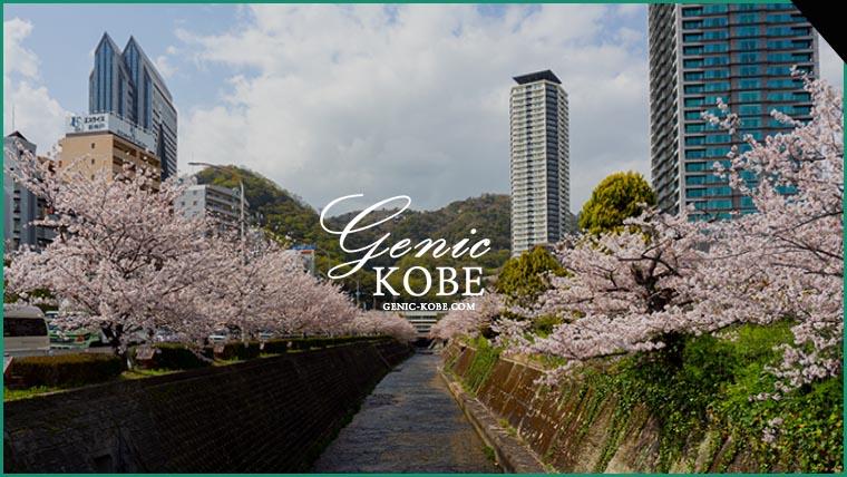 神戸で人気・穴場の花見スポット