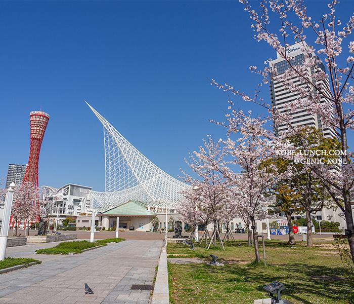 神戸メリケンパーク 桜