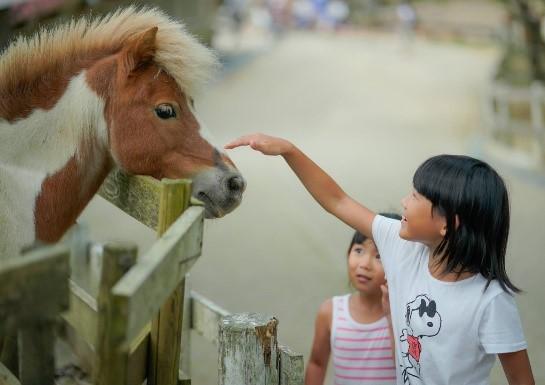 六甲山牧場で六甲さんさんまつりが開催中